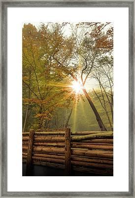 Golden Morning Framed Print