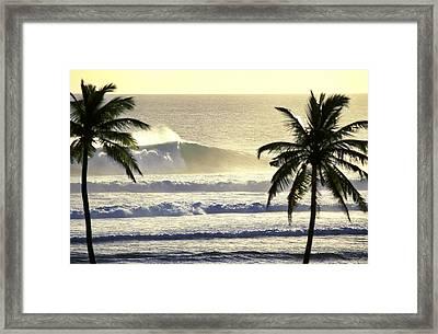Golden Palms Framed Print by Sean Davey