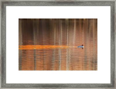 Golden Trail Framed Print by Bill Wakeley