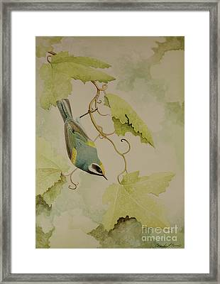 Golden-winged Warbler Framed Print