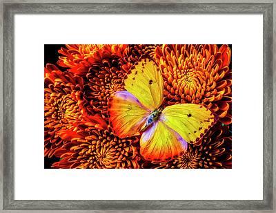 Golden Yellow Butterfly Framed Print