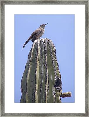 Framed Print featuring the photograph Good Morning by Jeanette Oberholtzer