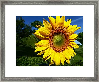 Good Morning Sunshine Framed Print by Tina M Wenger