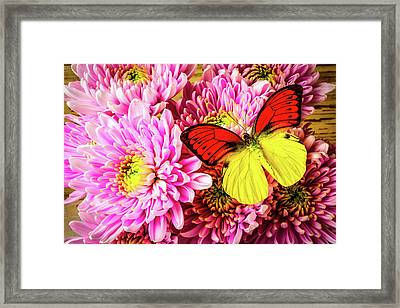 Gorgeous Orange Yellow Butterfly Framed Print