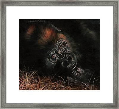 Gorilla Framed Print by David Stribbling