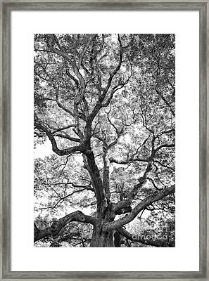 Granby Oak Framed Print