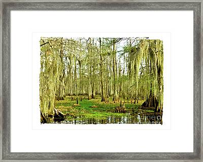 Grand Bayou Swamp  Framed Print by Scott Pellegrin