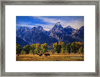 Grand Teton National Park Bison Framed Print
