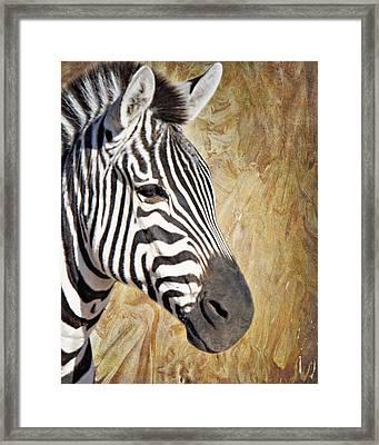 Grant's Zebra_a1 Framed Print