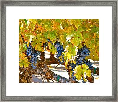 Grapes Framed Print by Dorota Nowak
