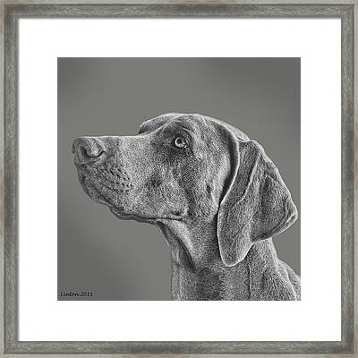 Gray Ghost Framed Print by Larry Linton