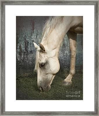 Grazing Framed Print by Betty LaRue