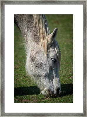 Grazing Horse Framed Print