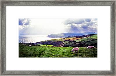 Grazing Sheep County Antrim Framed Print by Thomas R Fletcher