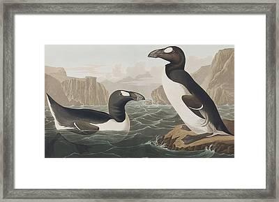 Great Auk Framed Print by John James Audubon