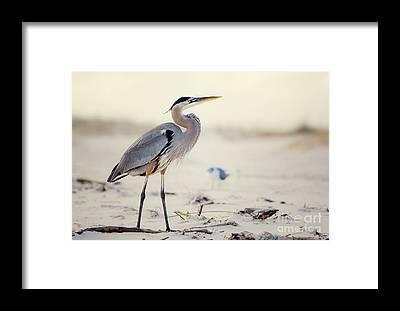 Driftwood Beach Framed Prints