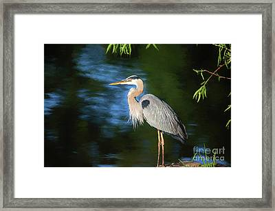 Great Blue - Digital Painting Framed Print