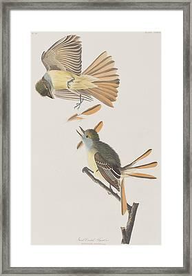 Great Crested Flycatcher Framed Print by John James Audubon