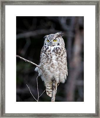Great Horned Owl  Framed Print by Jack Bell