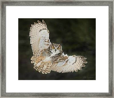 Great Horned Owl Wingspread Framed Print by CR Courson