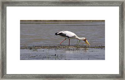 Great Rift Birds Framed Print
