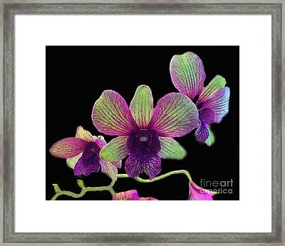 Green And Maroon Orchids Framed Print by Merton Allen