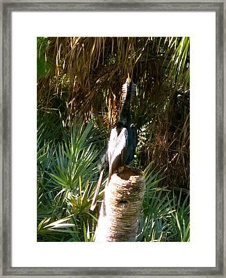 Green Cay Bird Framed Print by Fanny Diaz