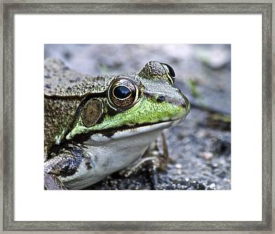 Framed Print featuring the photograph Green Frog by Michael Peychich