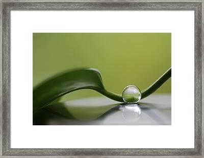 Green Harmony Framed Print