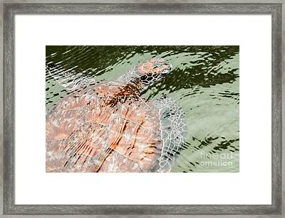 Green Sea Turtle  Framed Print by Jacques Jacobsz