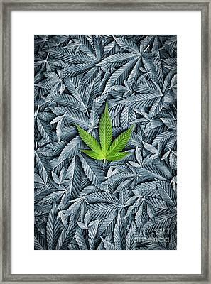 Green Framed Print by Tim Gainey
