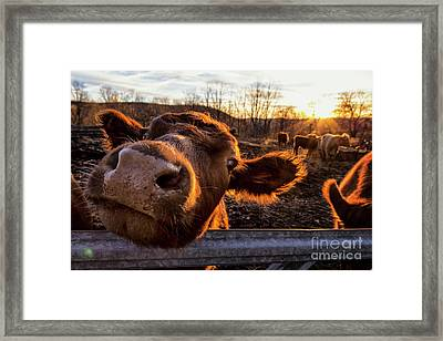 Greeting Framed Print