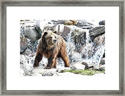 Griz Waterfall Framed Print by Athena Mckinzie