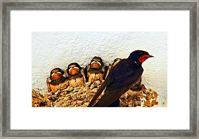Group Of Young Swallows In The Nest Digitally Painted Framed Print by Ken Biggs