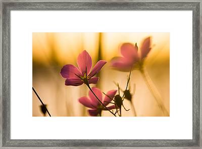 Growing Towards The Light Framed Print