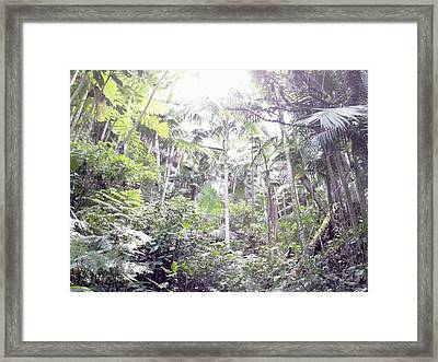 Guilarte's Forest Framed Print