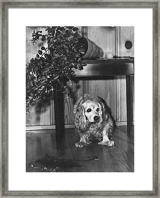 Guilty Looking Dog Framed Print by B. Kendrick Miller