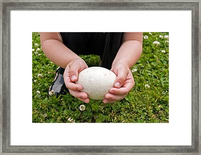 Handle With Care Framed Print by Maria Dryfhout