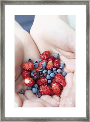 Hands Holding Berries Framed Print