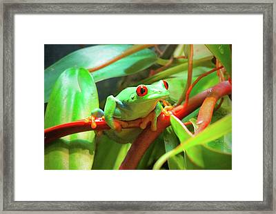 Hangin' In There Framed Print
