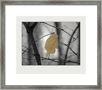 Hanging In The Balance Framed Print by Sue Stefanowicz