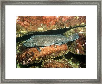 Hanging Out Framed Print by Thomas Robbins