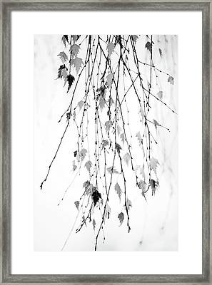 Framed Print featuring the photograph Hanging by Rebecca Cozart
