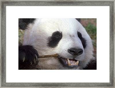 Happiness Framed Print by Mitch Cat