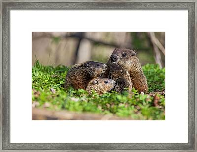 Happy Family Framed Print