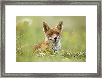 Happy Fox Is Happy Framed Print by Roeselien Raimond