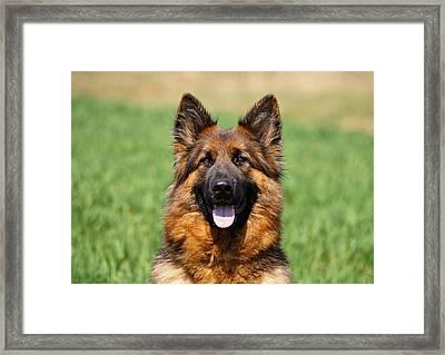 Happy Shepherd Framed Print by Sandy Keeton