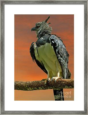 Harpy Eagle Framed Print by Larry Linton