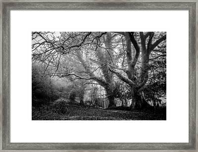 Haunted Forest Framed Print by Britten Adams