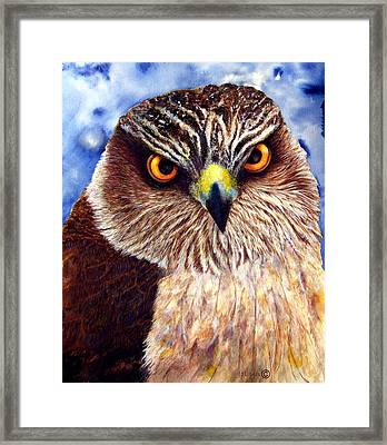 Hawkeyes Framed Print by JoLyn Holladay